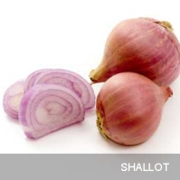 http://www.freshwaterindia.org/tag/shallot