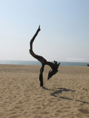 Yoga Tree on Patnem Beach | Goa