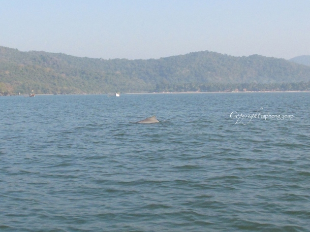 Dolphin | The Trishaw